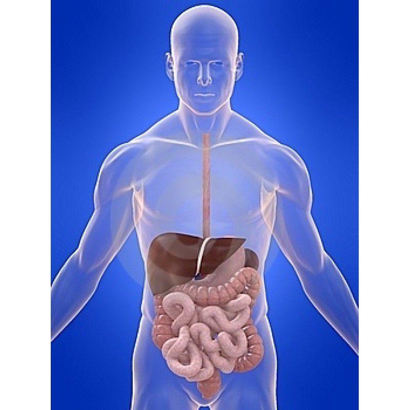 Composto Digestivo 60capsulas
