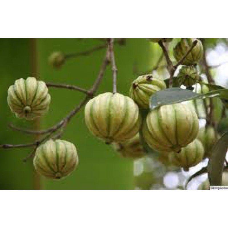 Garcinia Cambogia 500mg - 60 capsulas