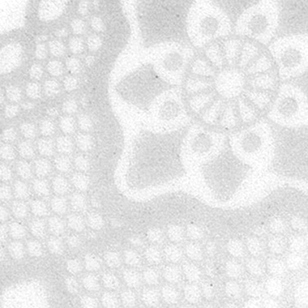 Jogo de Pratos de Sobremesa Porcelana Oxford Dress 22cm 6 Unidades