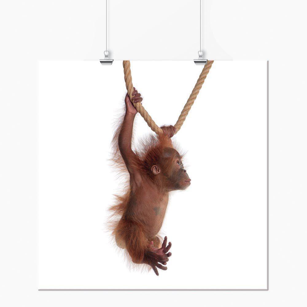 Pôster - Animais Macaco Filhote 3
