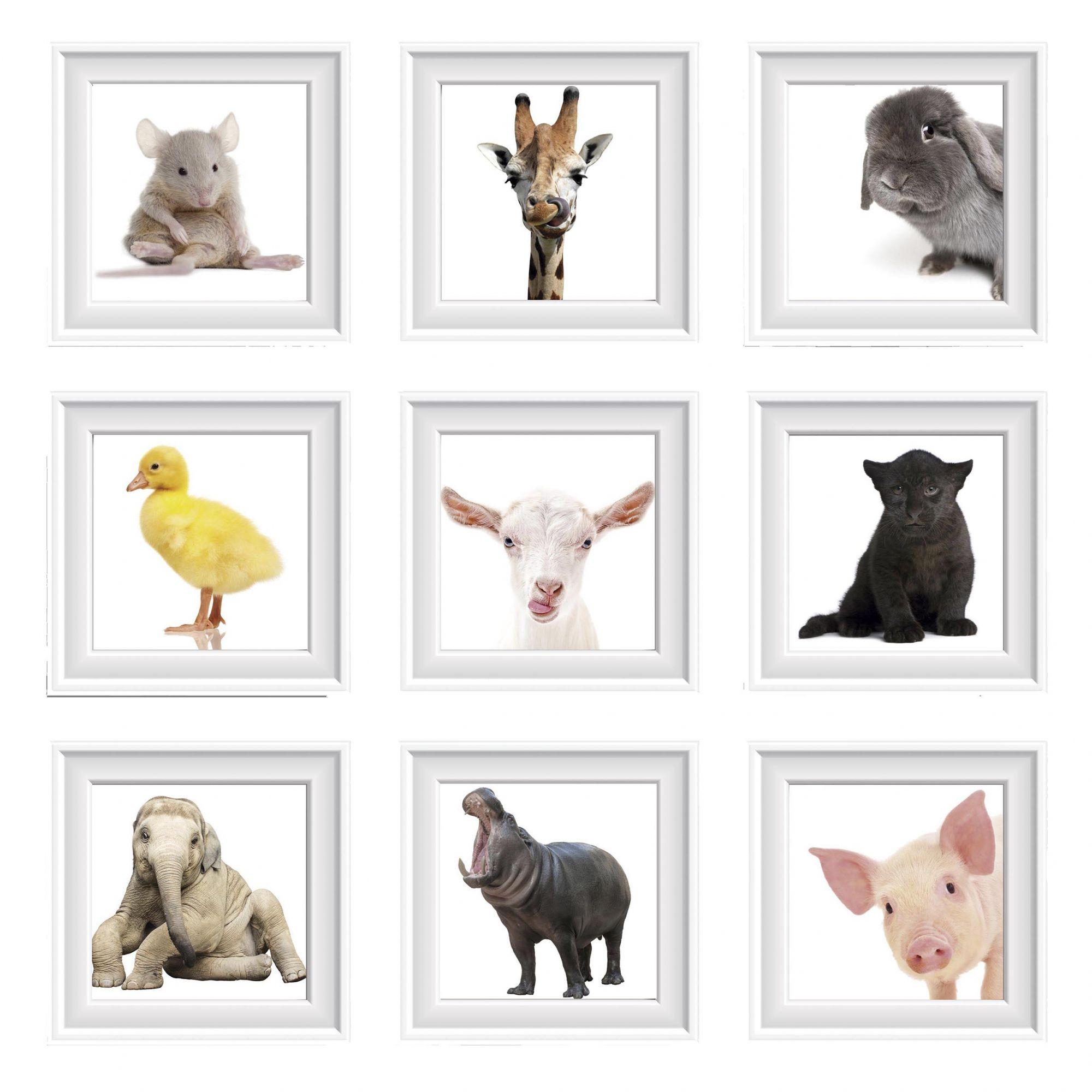Pôster Conjunto Animais 9 Unidades