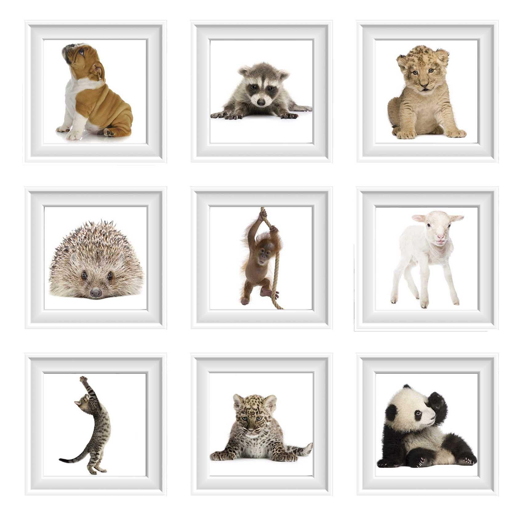 Pôster Conjunto Animais Filhotes 9 Unidades