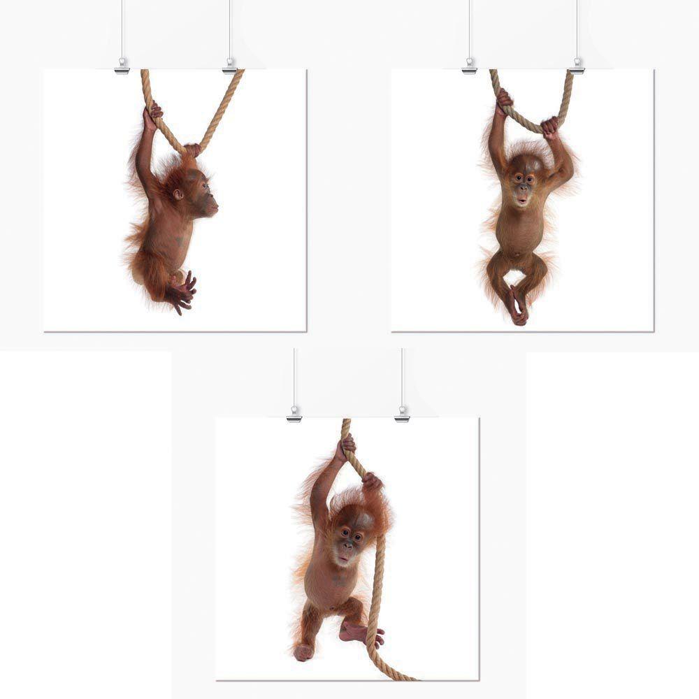 Pôster - Conjunto Macaco Filhote 3 Unidades