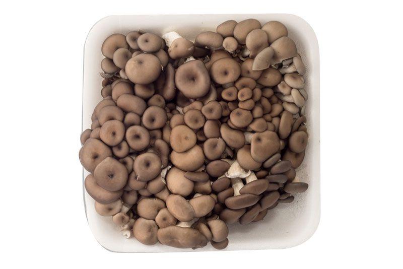Cogumelo Shimeji Preto - 200g