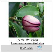 ESSÊNCIA FLOR DE FIGO