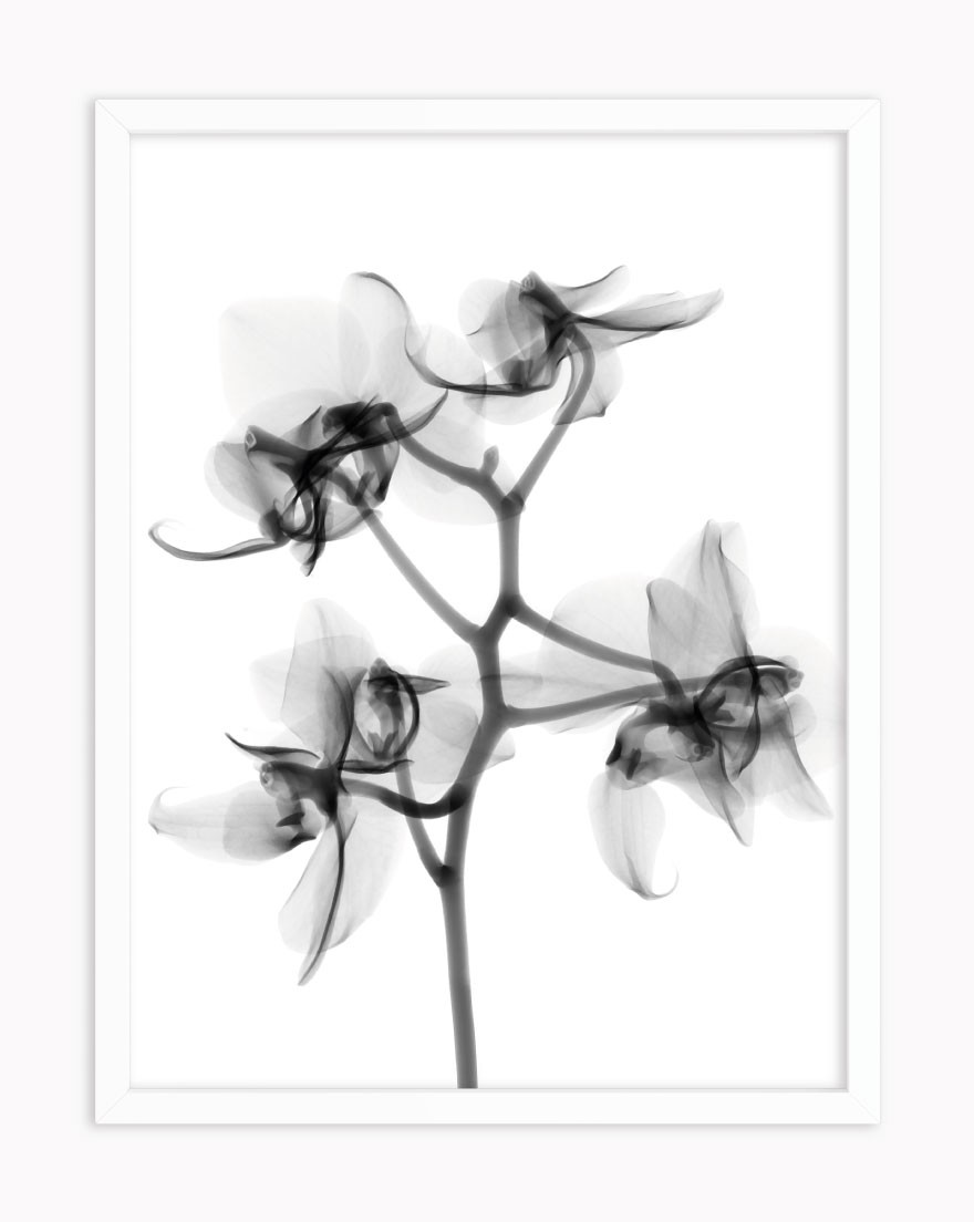 Quadro Abstract Flower BW