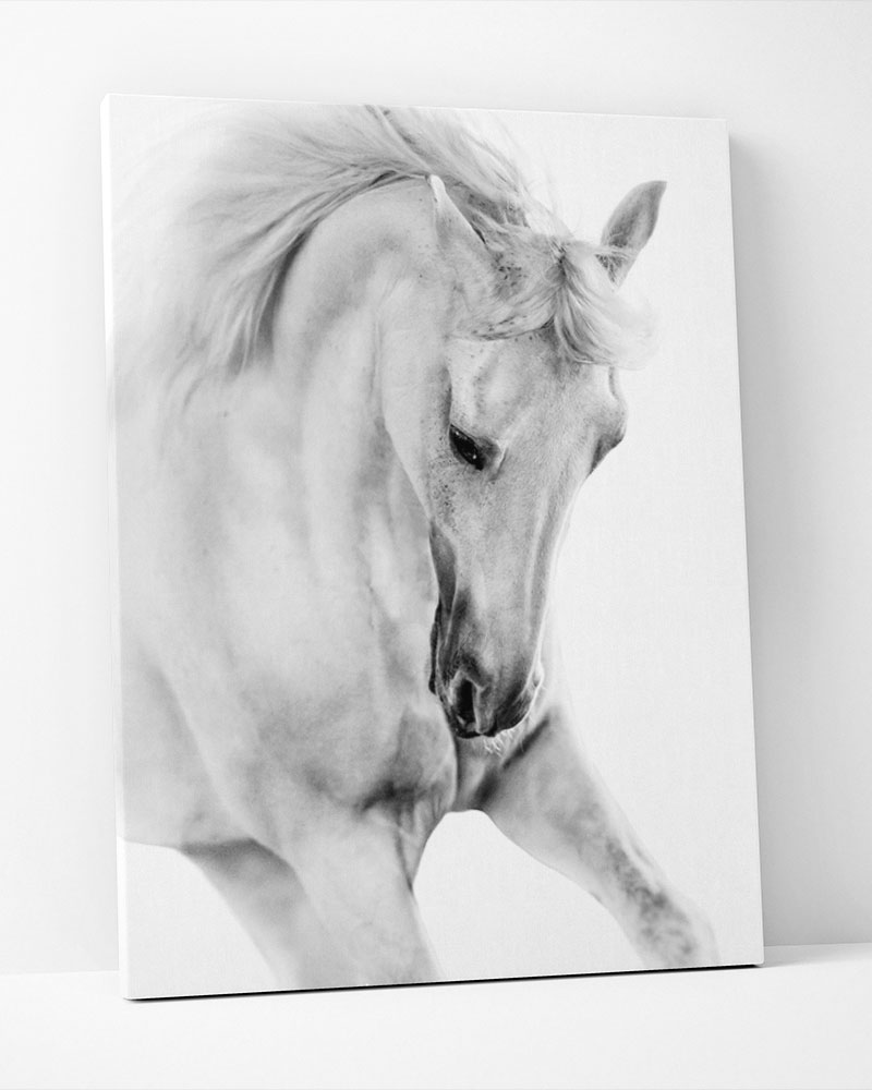 Placa Decorativa Cavalo Pb