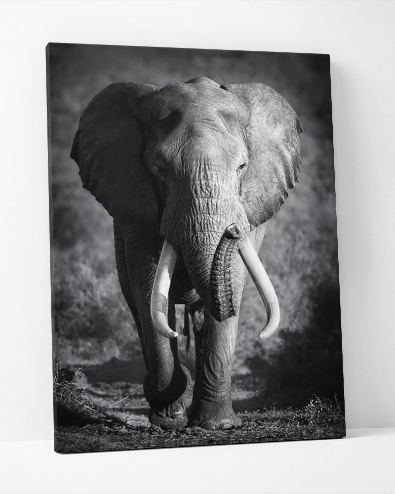 Placa Decorativa Elefante Pb