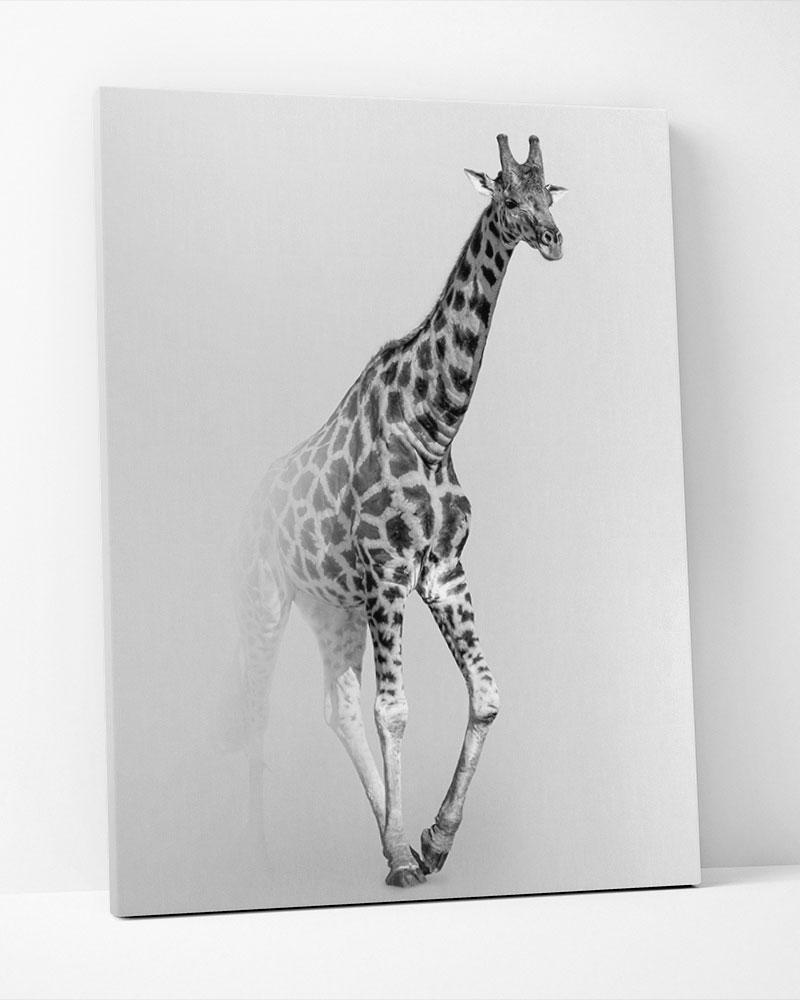 Placa Decorativa Giraffe