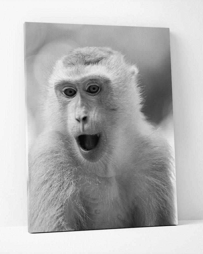 Placa Decorativa  Macaco Pb