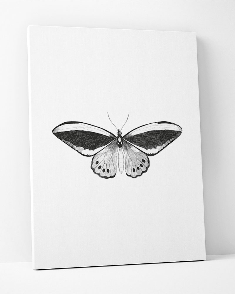 Placa Decorativa Mariposa Pb
