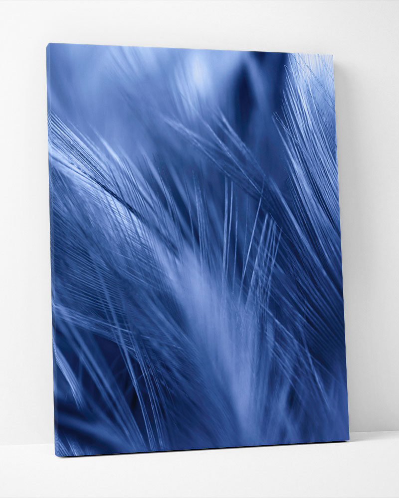Placa Decorativa Pluma Azul I