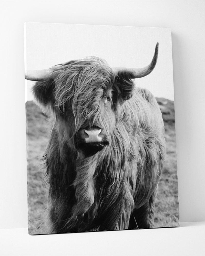 Placa Decorativa Scottish Catte Pb