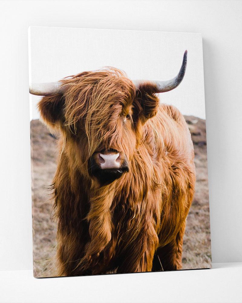 Placa Decorativa Scottish Cattle