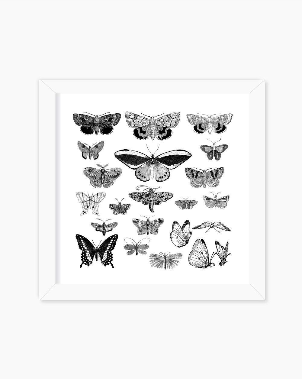 Quadro A Lot Of Butterflies