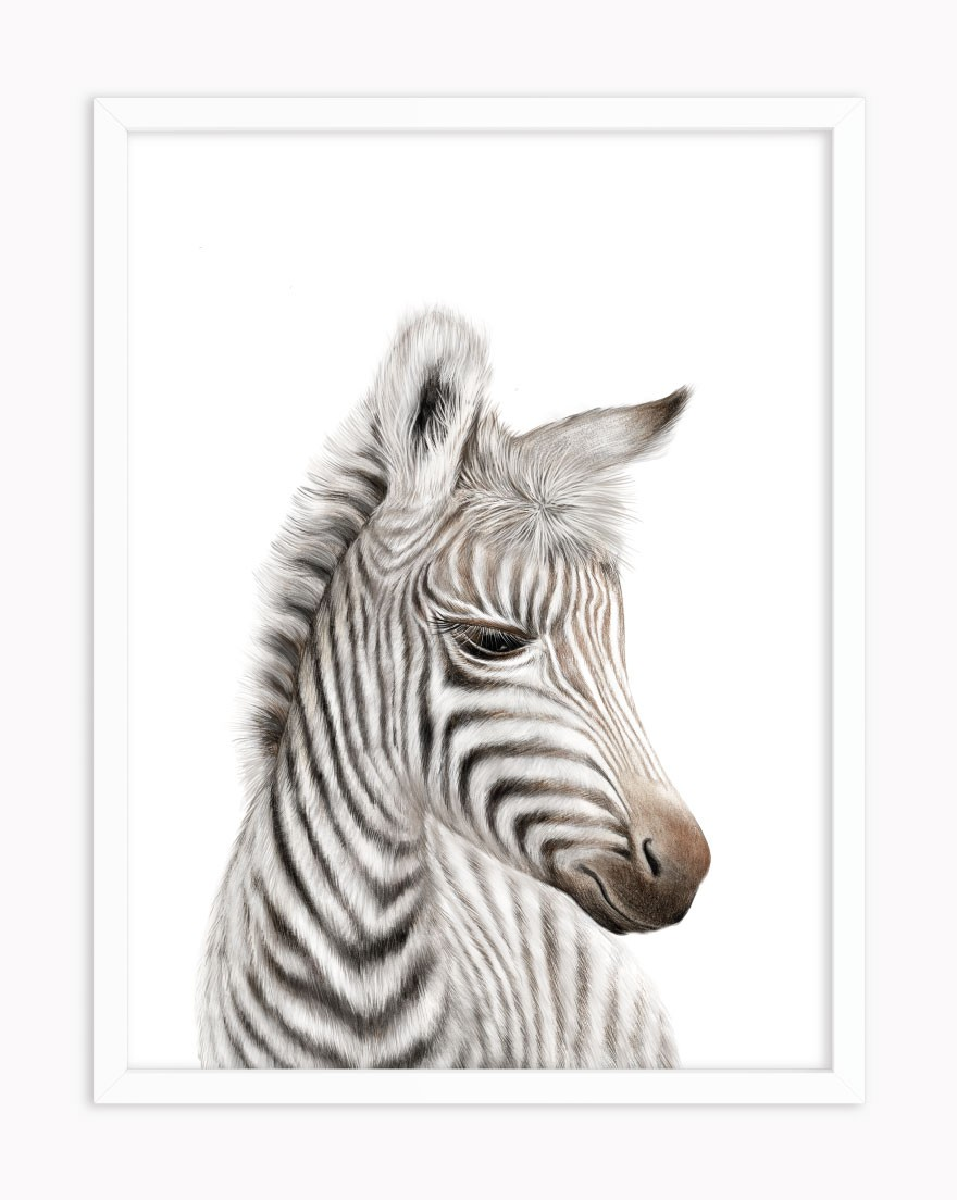 Quadro Baby Zebra