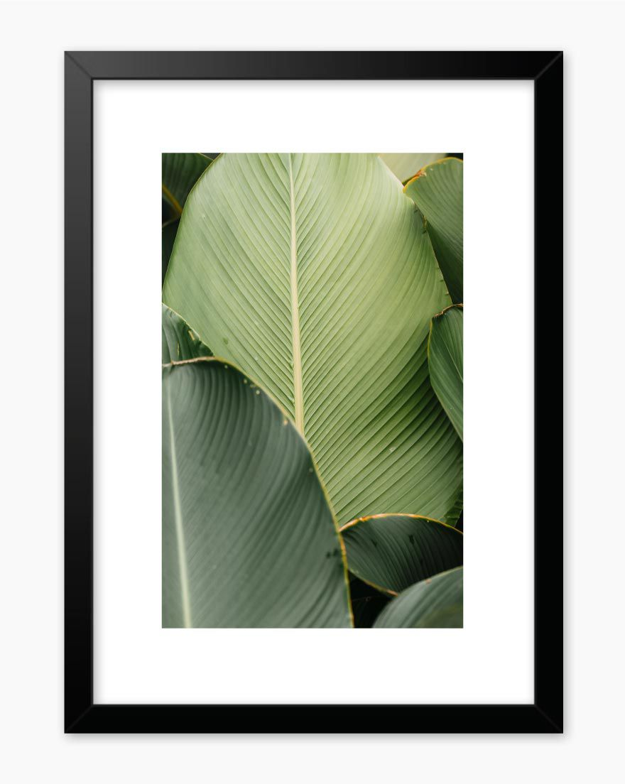 Quadro Banana Leaf Green