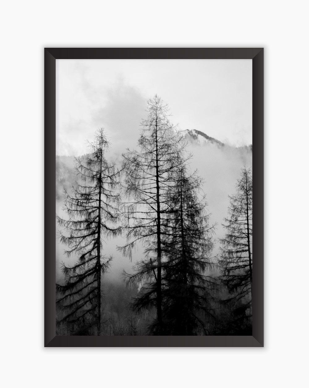 Quadro Black White Forest