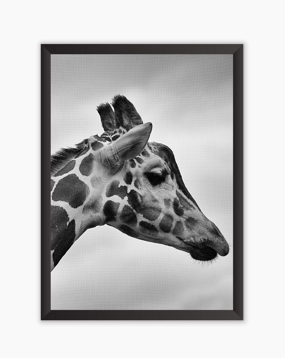 Quadro Black White Girafa