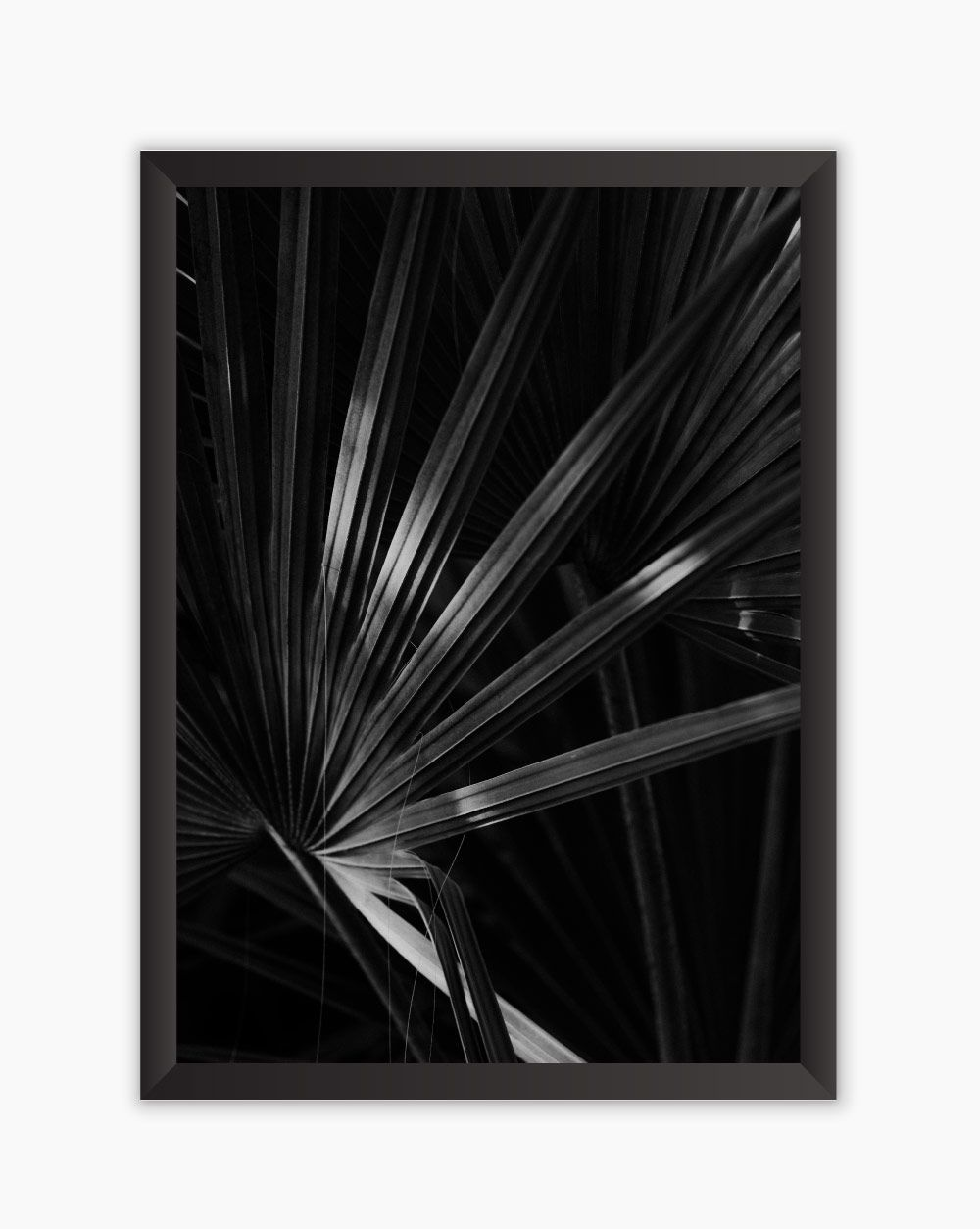 Quadro Black White Leaves