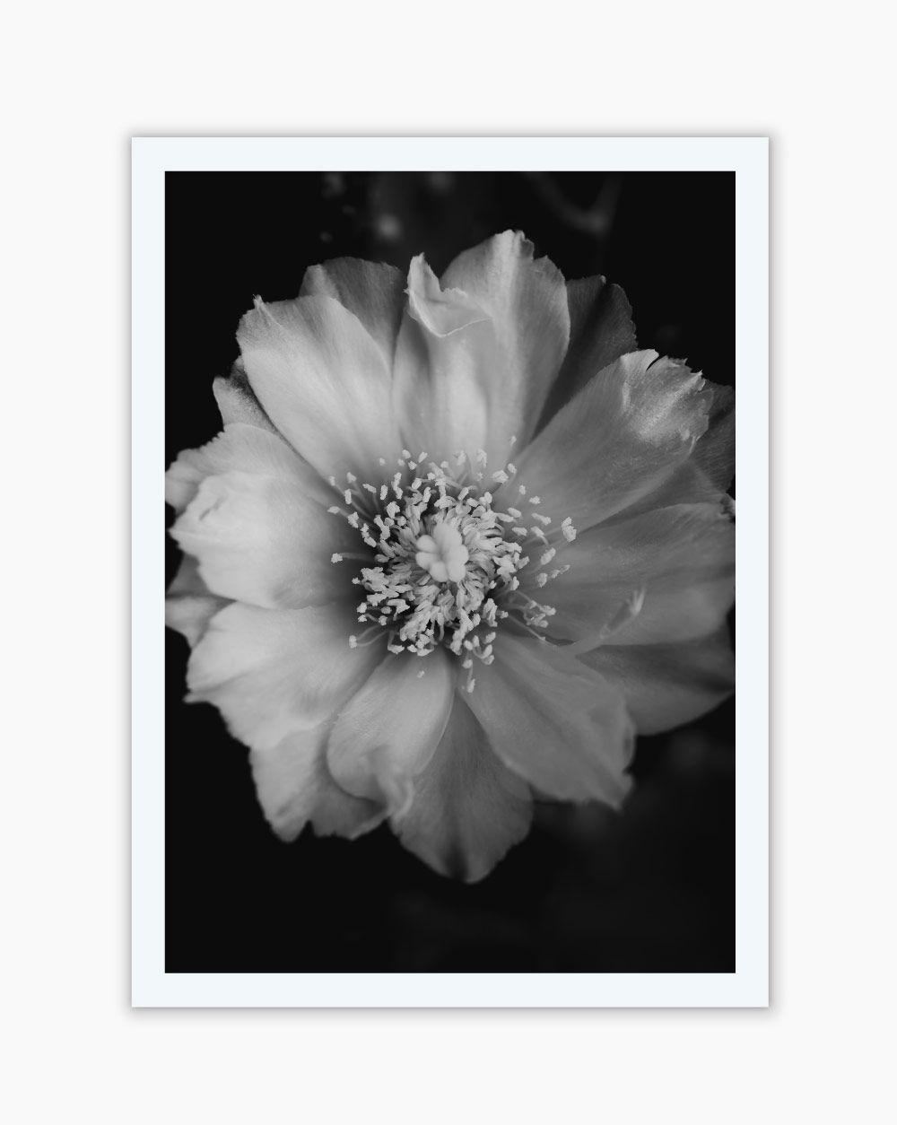 Quadro Black White Master Flower