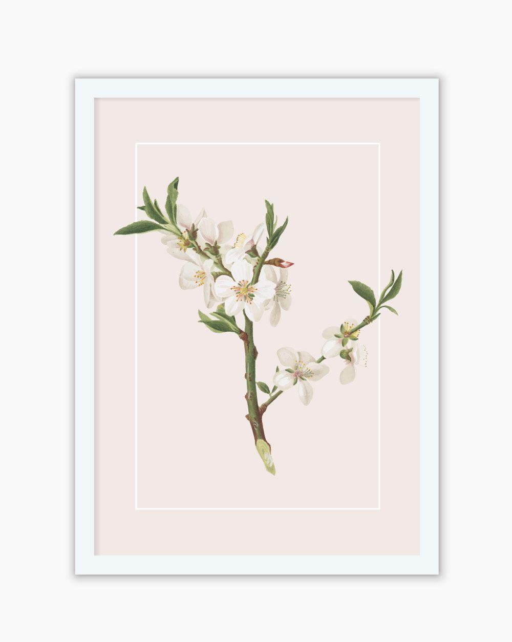 Quadro Botanical CherryBlossom White