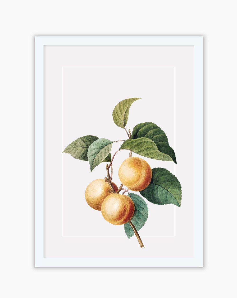 Quadro Botanical Orange