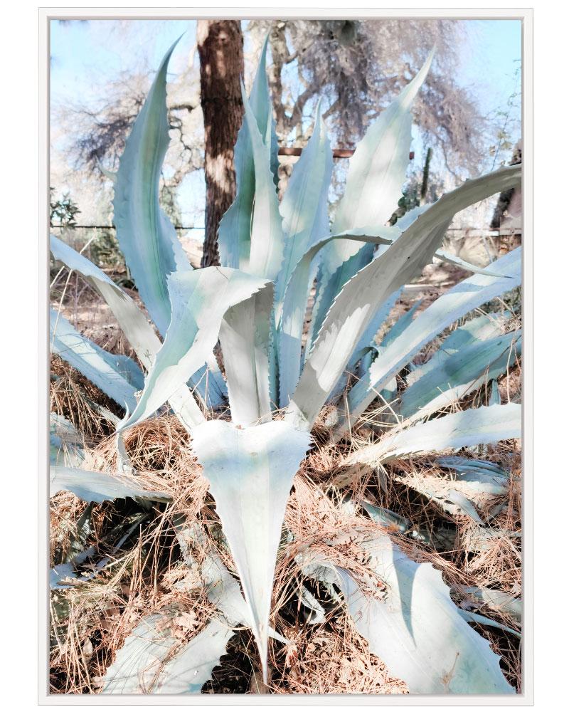 Quadro Cactus