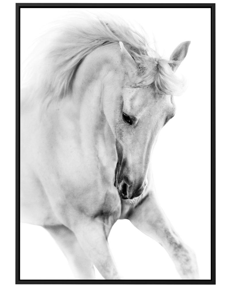Quadro Cavalo PB