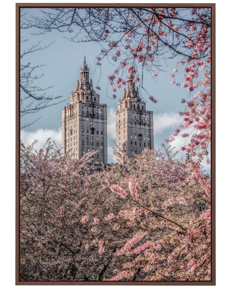 Quadro Cerejeiras na Cidade