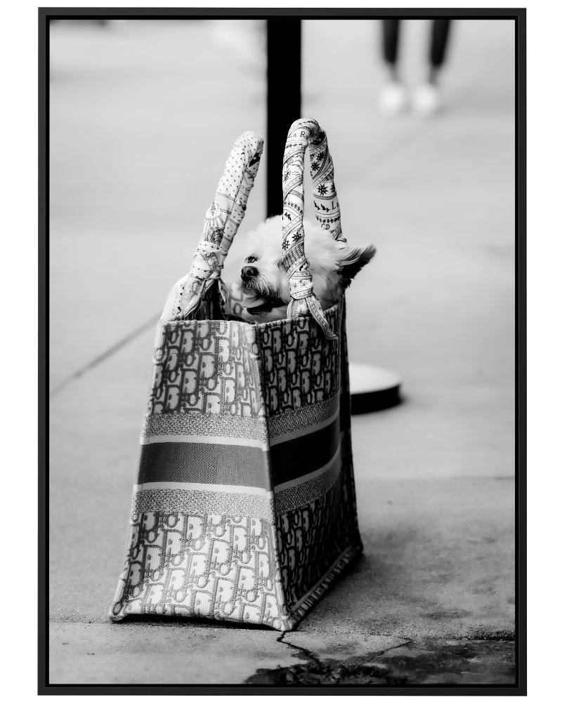 Quadro Dior Dog