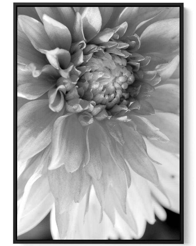Quadro Encanto De Flor