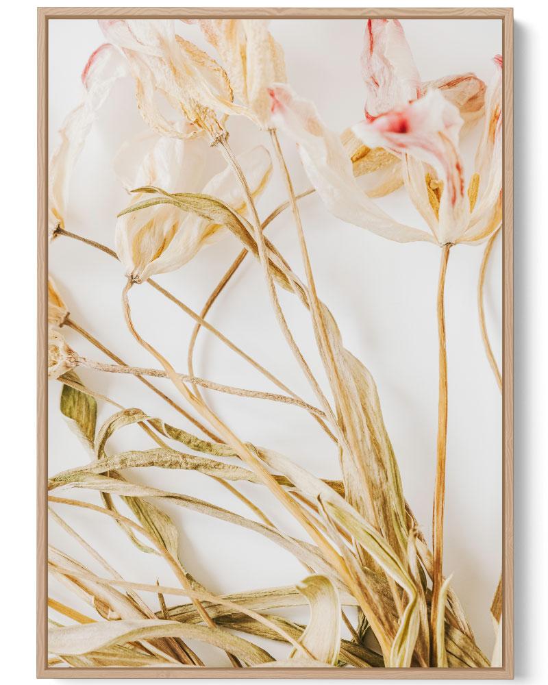 Quadro Flores Secas