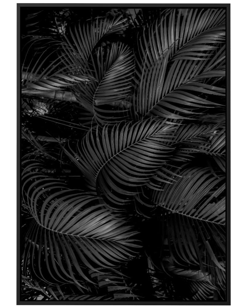 Quadro Floresta Tropical PB