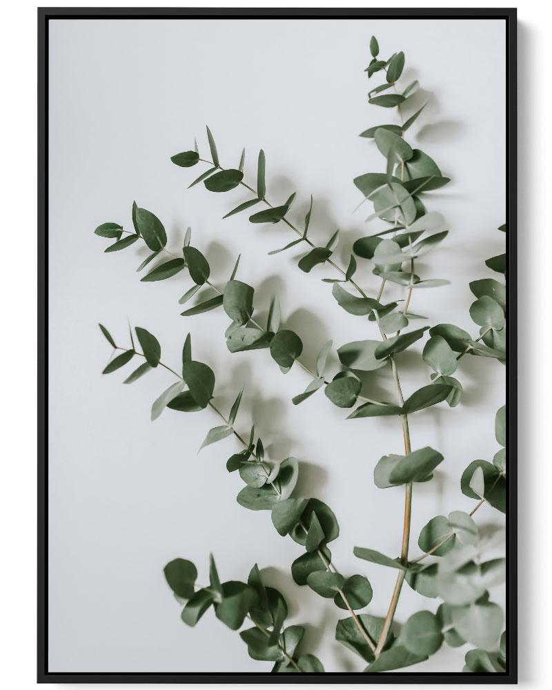 Quadro Folha De Eucalipto