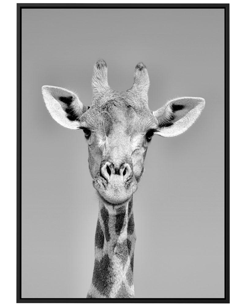Quadro Girafa PB