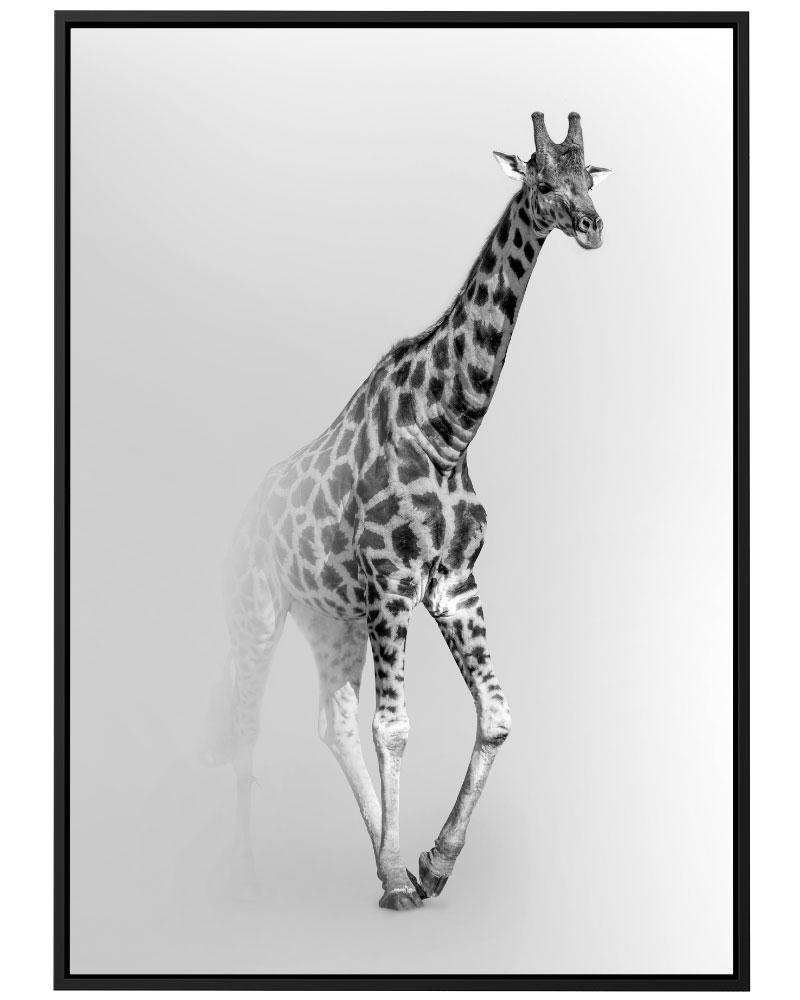 Quadro Giraffe