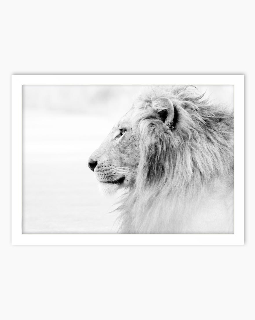 Quadro Lion - Horizontal