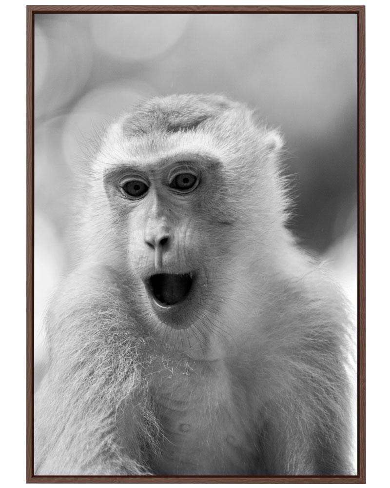 Quadro Macaco PB