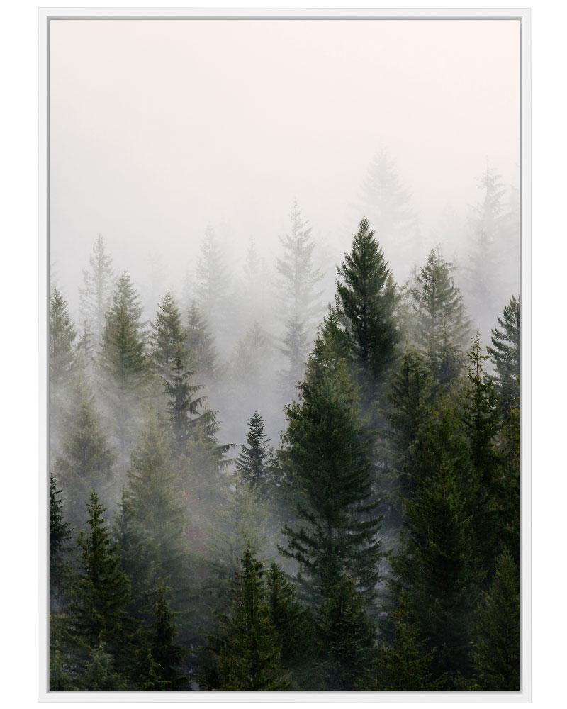 Quadro Névoa na Floresta