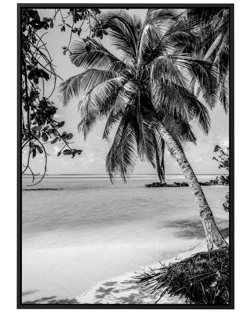 Quadro Paraíso Tropical PB