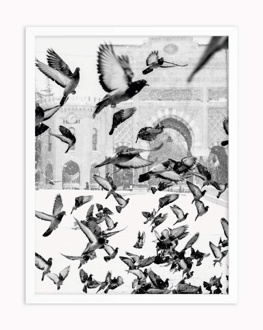 Quadro Pássaros PB