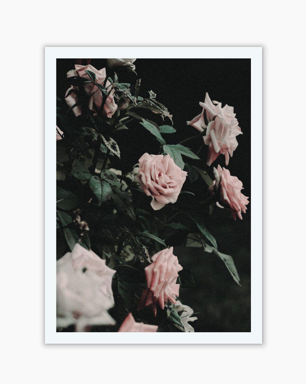 Quadro Pink Roses