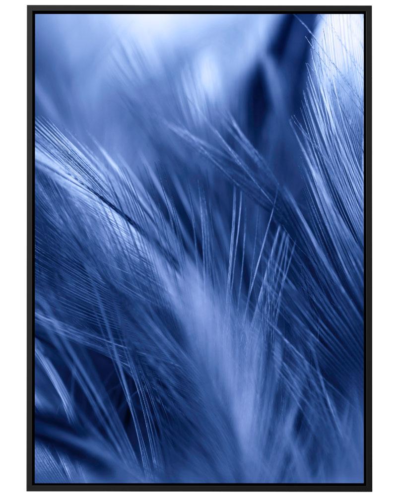 Quadro Pluma Azul I