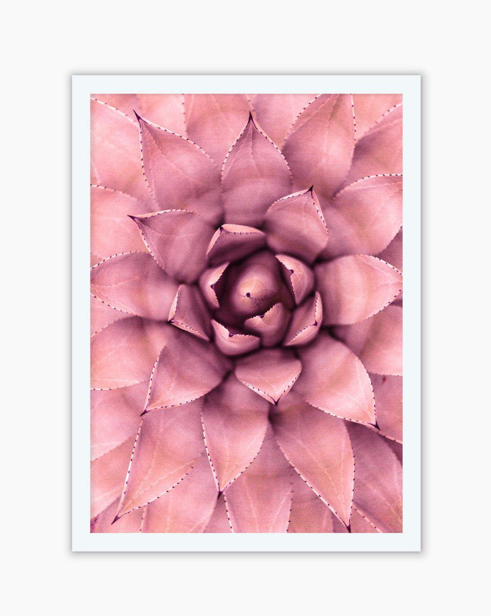 Quadro Suculenta Pink