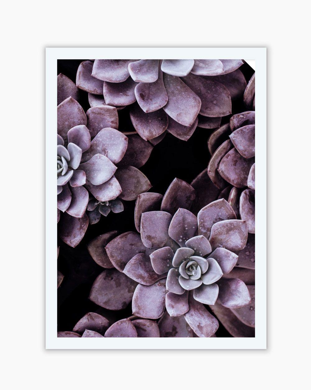 Quadro Suculenta Purple