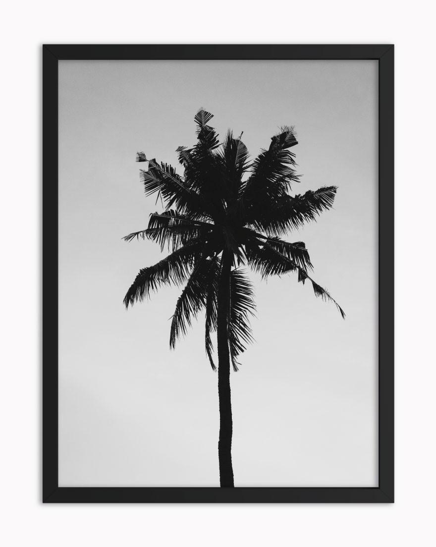 Quadro Tropical BW