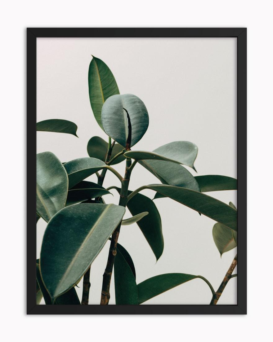 Quadro Tropical Green II