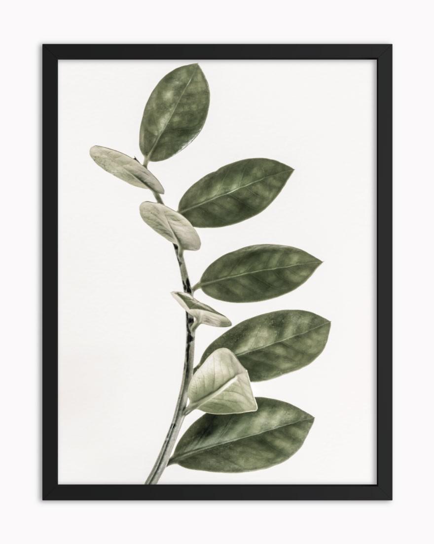 Quadro Tropical Green III