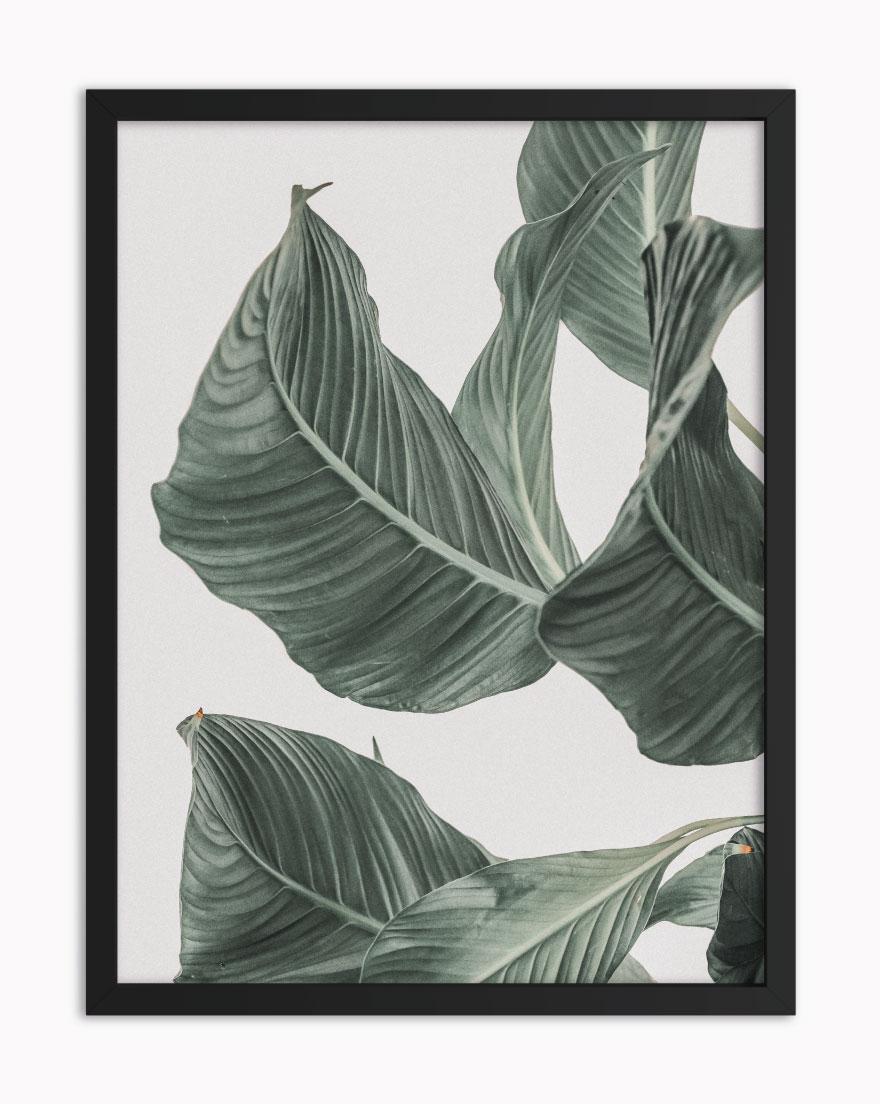 Quadro Tropical Green IV